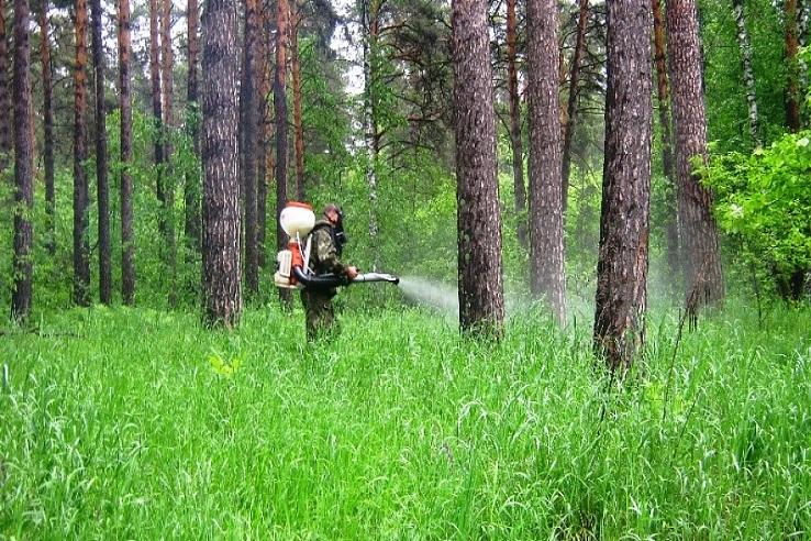 Обработка от клещей лесных массивов в Кулебаках